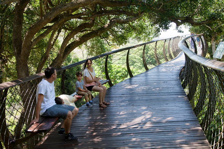 Boomslang Walkway Canopy at Kirstenbosch National Botanical Garden in Cape Town - South Africa