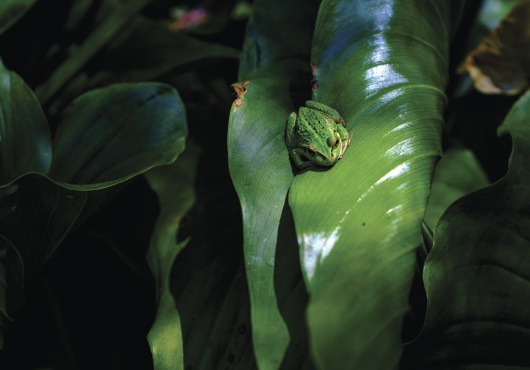 Frog on the Cape to Cape trail © Tourism Western Australia