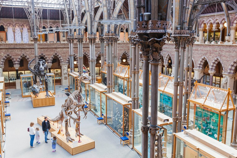 England, Oxfordshire, Oxford, Museum of Natural History, Interior View