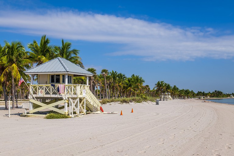 Key Biscayne, Crandon Beach - Florida (US) - Wildlife abounds at Key Biscayne's beautiful Crandon Beach