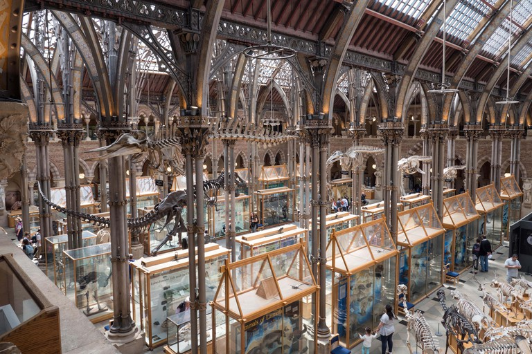 Internal view of the Natural History Museum, Oxford, England, UK.