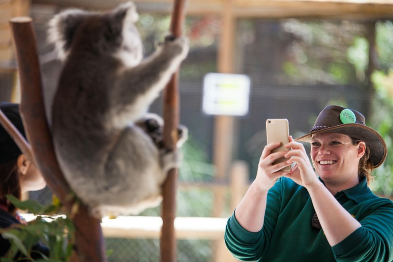 Perth Zoo worker photographing tourist posing with koala (Phascolarctos cinereus), Perth, Western Australia