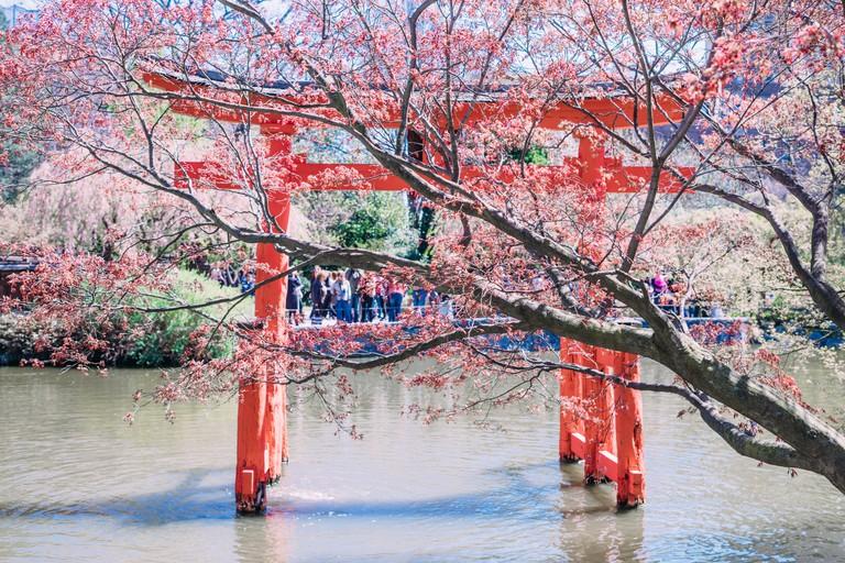 View of the Japanese Garden at Brooklyn Botanic Garden, New York City.