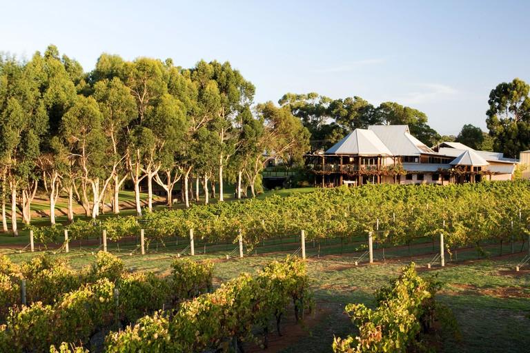 Vasse Felix vineyard. © Tourism Western Australia
