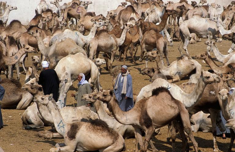 Camel market Birqash