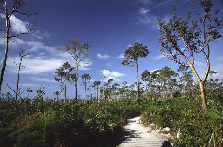 Path in Lucayan National Park, Grand Bahama Island, Bahamas.
