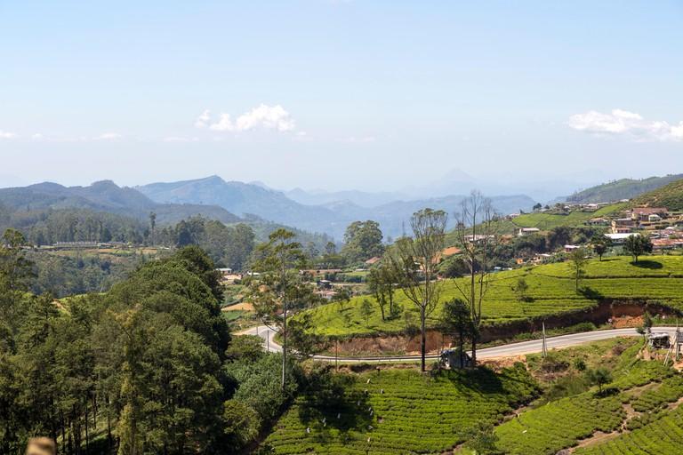 Landscape view tea estate, Nuwara Eliya, Central Province, Sri Lanka, Asia
