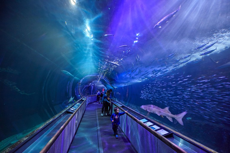 The tunnel under the sea in the Aquarium of the Bay