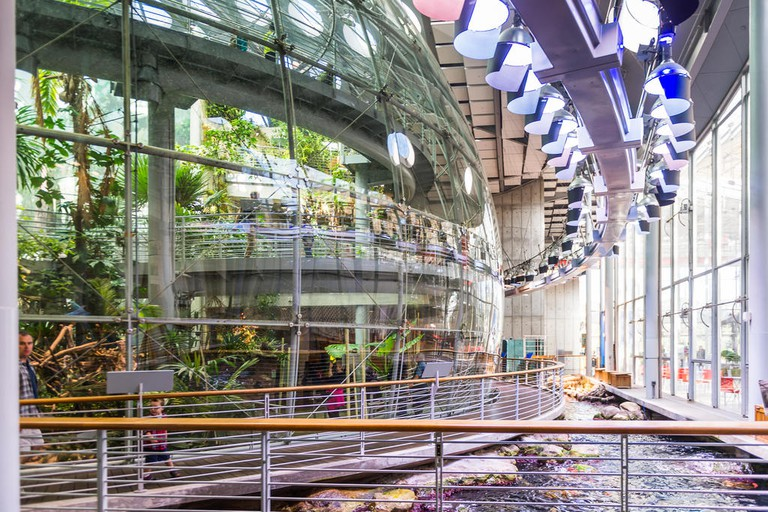 The California Academy of Sciences has its own aquarium and rooftop garden
