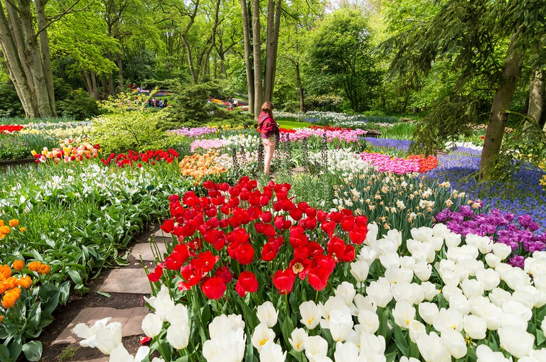 KEUKENHOF TULIP GARDENS WITH MANY COLOURED FLOWERS GROWING AMONG THE TREES IN SPRINGTIME HOLLAND