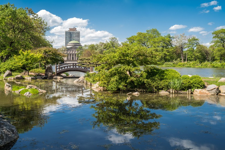 Jackson Park's Garden of the Phoenix features a number of native Japanese plants