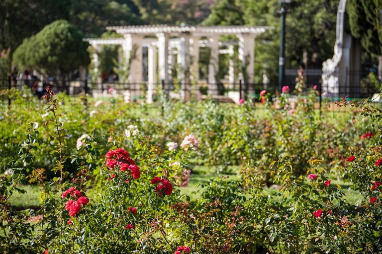 Rose garden, Paseo El RosedalEl Rosedal De Palermo, 3 De Febrero ParkParque 3 De Febrero, Buenos Aires, Argentina