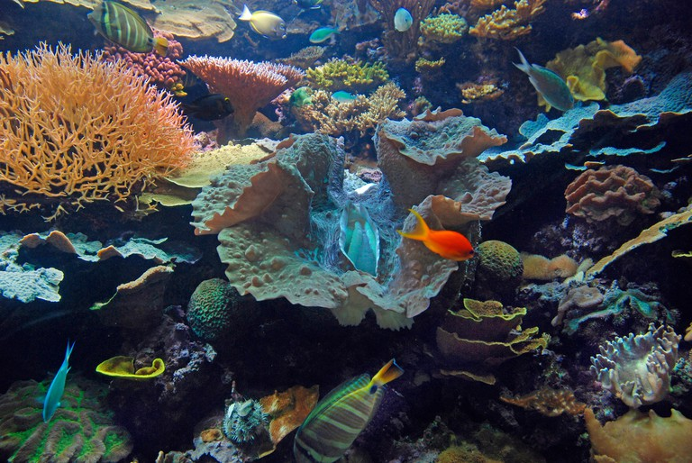 Coral reef on display at Chicago Shedd Aquarium