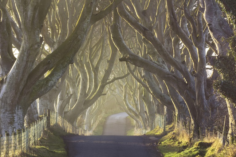 The Dark Hedges from County Antrim, Northern Ireland