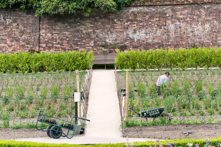 The Lost Gardens of Heligan, Cornwall, UK. A gardener at work among the vegetables in the kitchen garden