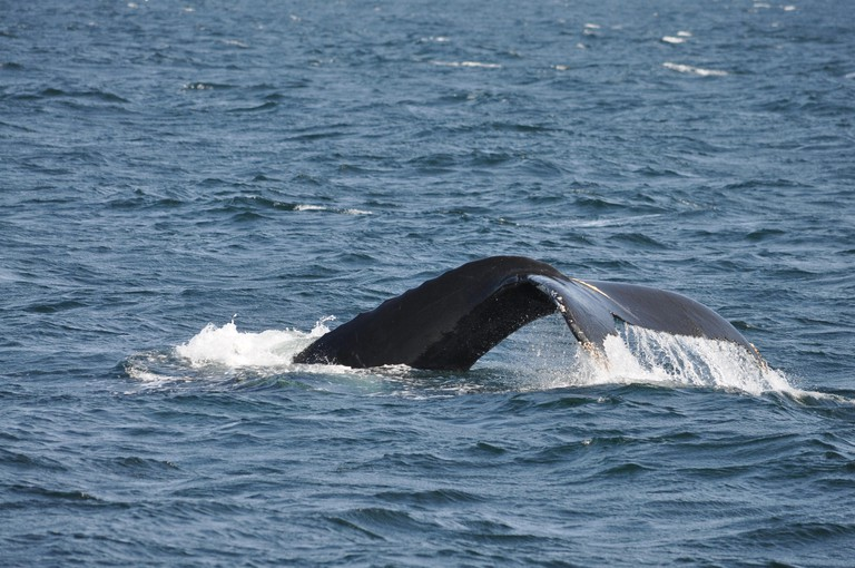Watching the whales from Boston Harbor