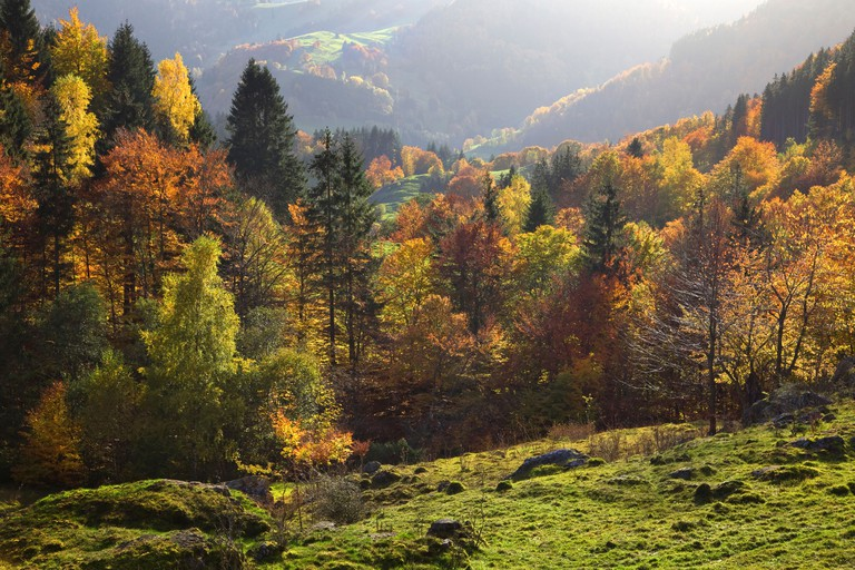 Autumn Black forest Germany Coloured leaves Feldberg Schwarzwald