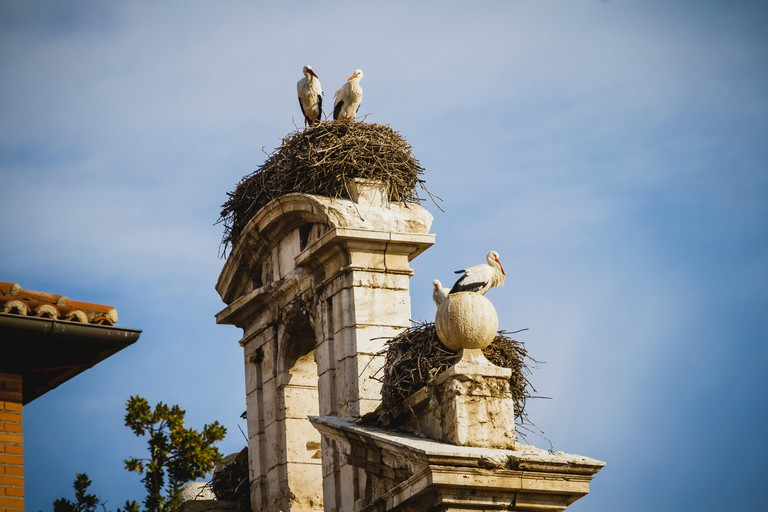 storks nest, Spanish town of Alcala de Henares, palaces and ancient university