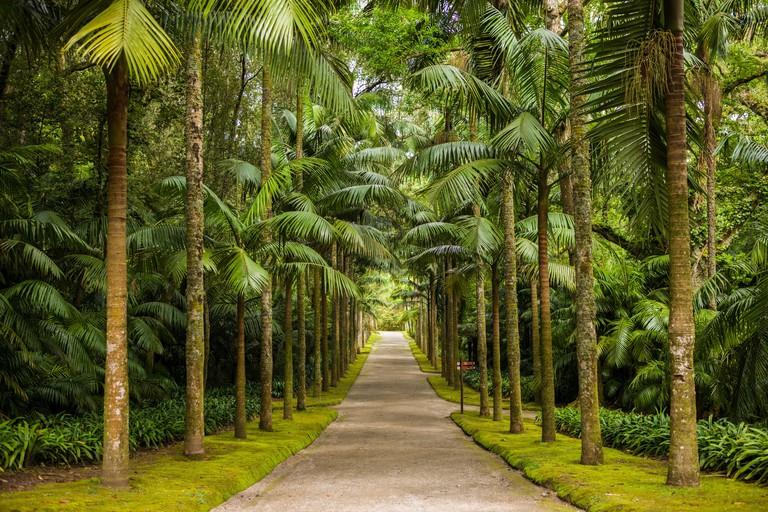 Portugal, Azores, Sao Miguel Island, Furnas. Terra Nostra Garden, tree-lined path