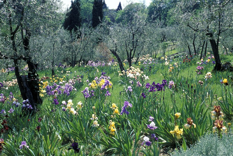 Iris Garden, Florence.