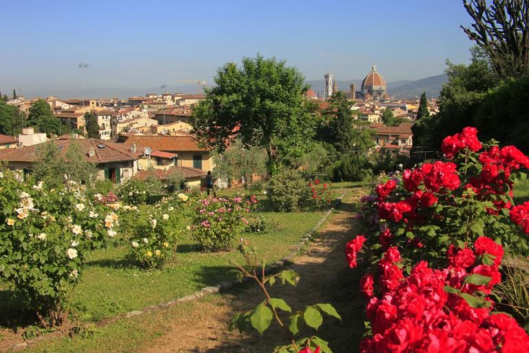 Rose garden, Florence, Tuscany, Italy.