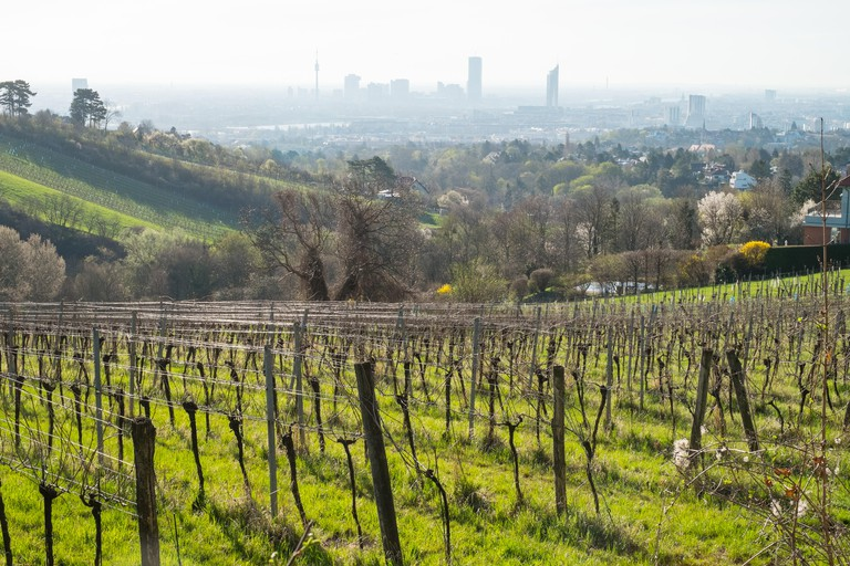 The Vienna Woods stretch for miles from the city limits to the foothills of the Alps