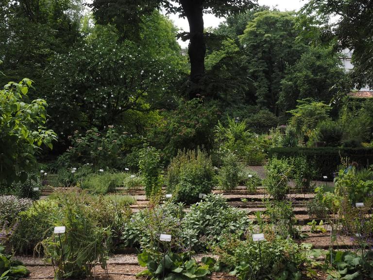 Orto Botanico di Brera, botanical garden, University of Milan, Milan, Lombardy, Italy, Europe