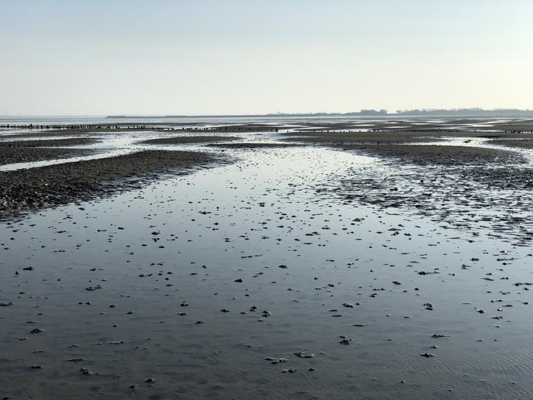 Island Langeoog: Wadden Sea