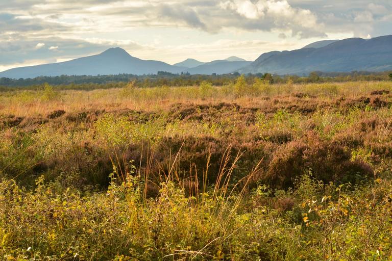 Flanders Moss Nature Reserve, Scotland.