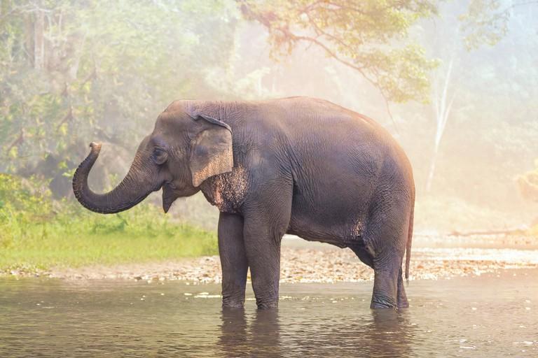 Elephants on nature river