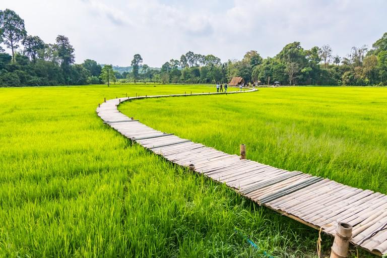 Wooden bridge walkway Bamboo bridge spanning to the rice field Nakhon Nayok Thailand