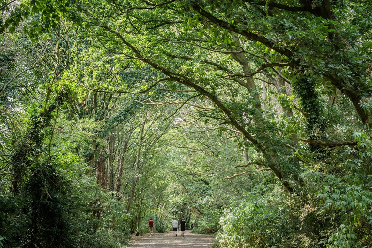 The Parkland Walk is a local nature reserve in London. It is covered by a canopy of leafy green trees. In the distance people are walking.