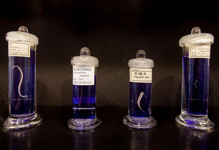 Parasites are displayed in jars at the Meguro Parasitological Museum