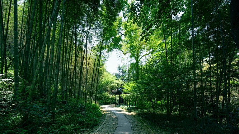 Footpath Passing Bamboo Forest,Hangzhou,China