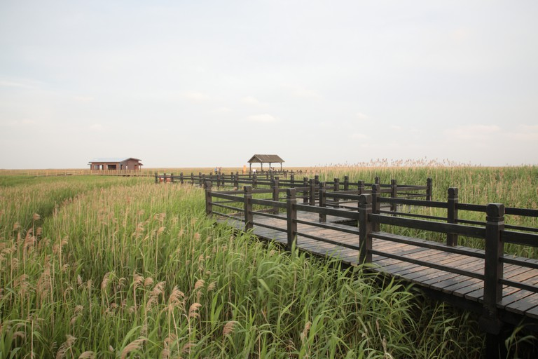 DongTan Migratory Bird Protection Area