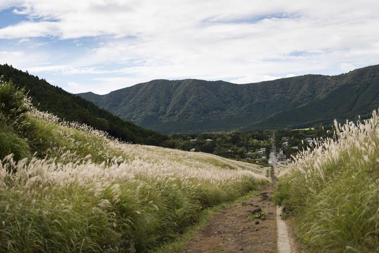 Sengokuhara pampas grass fields in Hakone