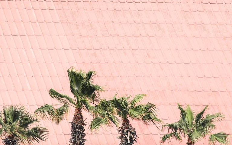 Palm Trees Against Rooftop Tiles