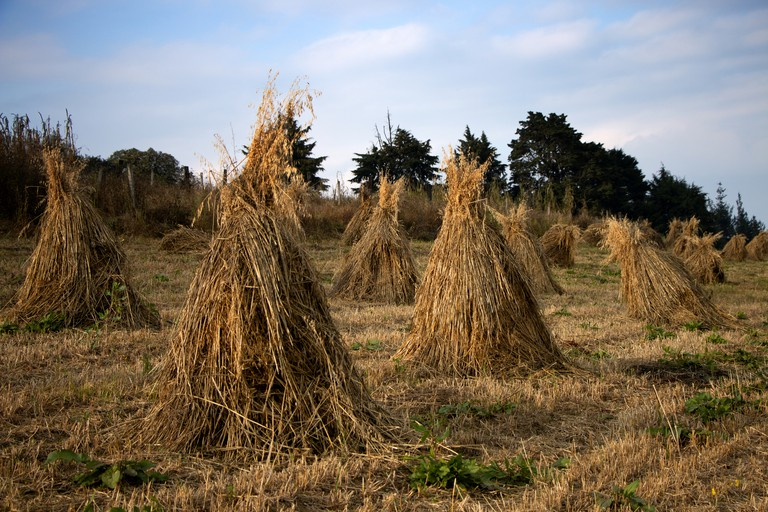 Mounds of straw in the Ajusco