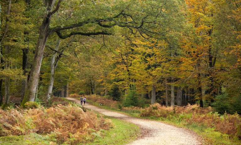 Path leading through the New Forest, UK