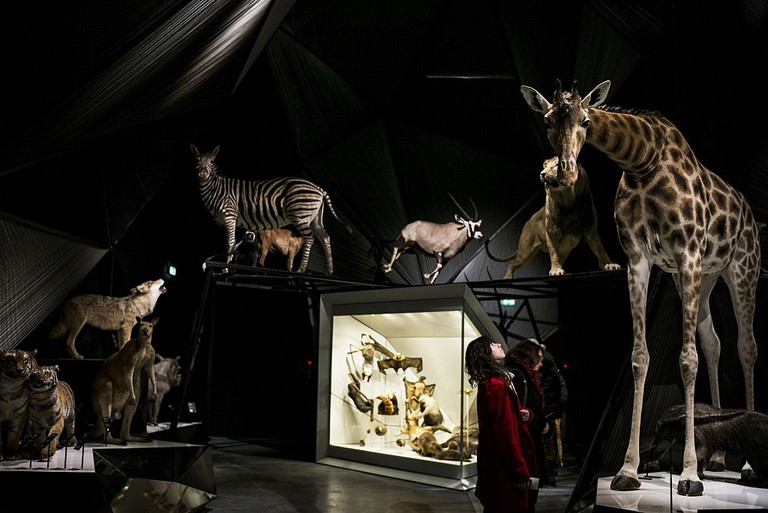 FRANCE-MUSEUM-SCIENCE-ANTHROPOLOGY