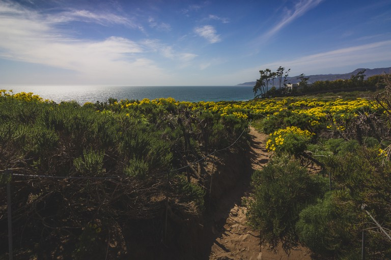 Point Dume Spring Wildflowers