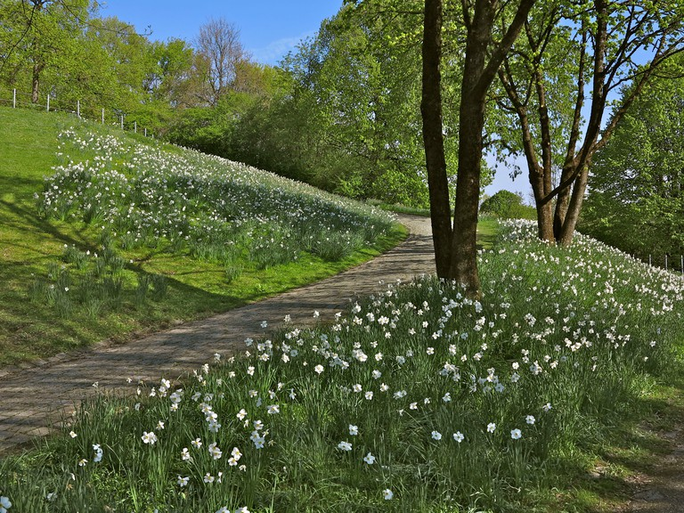Germany, Bavaria, Munich, west park, narcissus meadow, park way, trees, spring