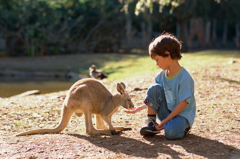 Currumbin Sanctuary, Australia.