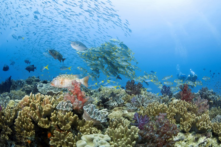Healthy Reef System, Papua New Guinea