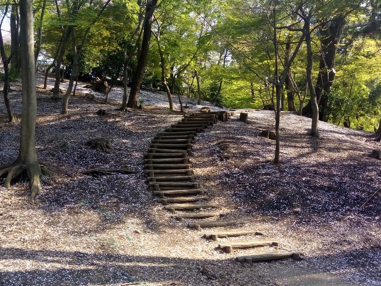 Cherry blossoms/Sakura 2017 at Toyama Park, Hakoneyama and surrounding areas (Set 1)