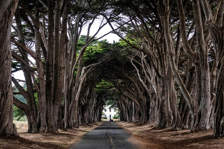 A cypress tree tunnel lines the drive to the historic RCA radio station at the Point Reyes National Seashore