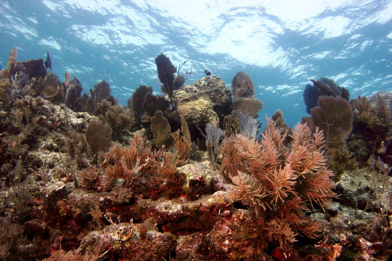Fish and corals in the Florida Keys National Marine Sanctuary.