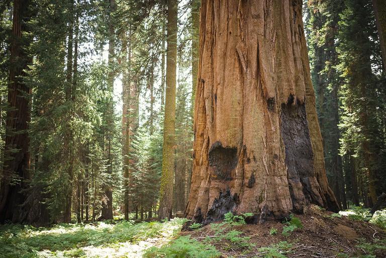 Sequoia National Park at sunset, California