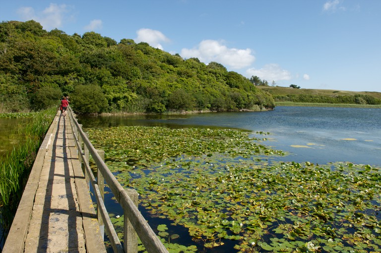 Bosherston Lily Ponds, Pembrokeshire, Wales. Image shot 2010. Exact date unknown.