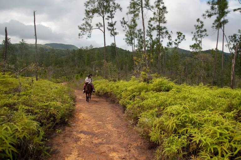 Horse riding through Belize, Central America